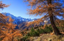 Traccia di autunno Immagine Stock