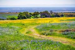 Traccia di camminata attraverso i settori coperti in wildflowers, riserva ecologica della Tabella del nord, Oroville, California immagini stock libere da diritti