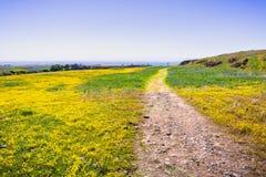 Traccia di camminata attraverso i settori coperti in wildflowers, riserva ecologica della Tabella del nord, Oroville, California fotografia stock libera da diritti