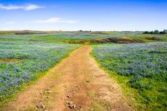 Traccia di camminata attraverso i settori coperti in wildflowers, riserva ecologica della Tabella del nord, Oroville, California fotografia stock