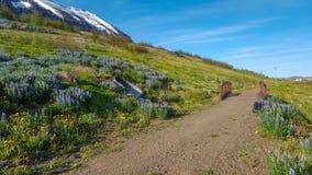 Traccia di camminata con i fiori selvaggi e una montagna fotografia stock libera da diritti