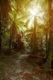 Traccia di camminata della foresta Fotografia Stock Libera da Diritti