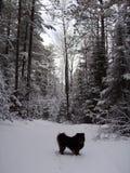 Traccia di camminata Minnesota del cane Fotografie Stock