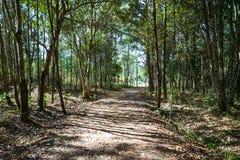 Traccia di camminata naturale del paesaggio nell'istruzione della natura della foresta thailand fotografia stock libera da diritti