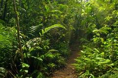 Traccia di camminata nella giungla Fotografia Stock