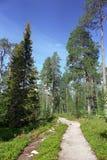 Traccia di escursione Immagine Stock