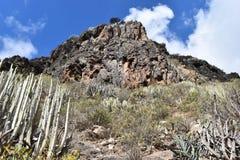 Traccia di escursione al canyon famoso Barranco del Infierno a Adeje nel sud di Tenerife con molti cactus nella parte anteriore fotografia stock libera da diritti