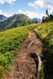 Traccia di escursione in alpi, Austria, concetto di felicità del cambiamento di modo di vita Fotografia Stock