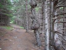 Traccia di escursione attraverso la foresta Immagine Stock