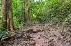 Traccia di escursione attraverso la foresta fotografie stock