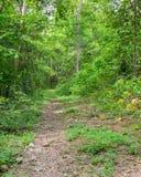 Traccia di escursione attraverso la foresta immagine stock libera da diritti