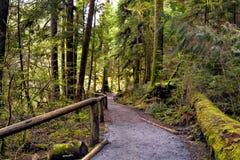 Traccia di escursione attraverso la foresta bagnata Fotografie Stock Libere da Diritti