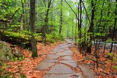 Traccia di escursione attraverso la foresta della Pensilvania Immagini Stock