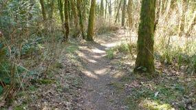 Traccia di escursione che passa attraverso il legno fotografia stock