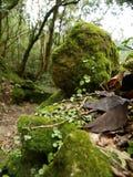 Traccia di escursione del Mt Paesaggio, Saba Immagine Stock