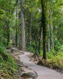 traccia di escursione della foresta fotografia stock libera da diritti