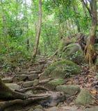 Traccia di escursione della foresta pluviale fotografie stock libere da diritti