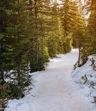 Traccia di escursione della racchetta da neve nell'abetaia fotografia stock