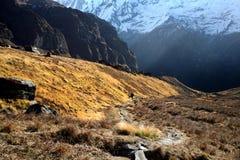 Traccia di escursione di Annapurna Fotografie Stock Libere da Diritti