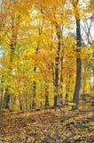 traccia di escursione di autunno Fotografia Stock Libera da Diritti