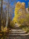 Traccia di escursione durante l'autunno con un pieno laterale e l'altro vuoto immagini stock libere da diritti