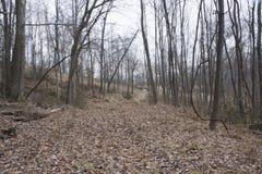 Traccia di escursione in foresta fotografia stock libera da diritti