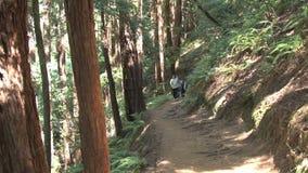 Traccia di escursione in foresta video d archivio