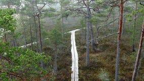 Traccia di escursione di legno del sentiero costiero attraverso la terra della palude stock footage