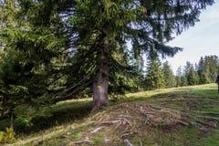 Traccia di escursione in montagne della Svizzera immagine stock