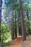 Traccia di escursione nel parco della sequoia immagini stock libere da diritti