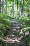 Traccia di escursione nel parco nazionale di Shenandoah, la Virginia fotografia stock libera da diritti
