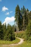 Traccia di escursione nella foresta Fotografia Stock