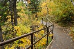 Traccia di escursione nella foresta di autunno Immagine Stock