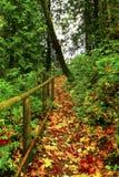 Traccia di escursione di nord-ovest pacifica della foresta Immagine Stock Libera da Diritti