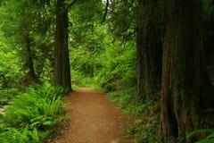 Traccia di escursione di nord-ovest pacifica della foresta Immagini Stock
