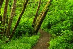 Traccia di escursione di nord-ovest pacifica della foresta Fotografie Stock