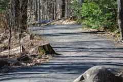 Traccia di escursione provinciale dell'allerta del parco del Algonquin Immagine Stock