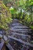 Traccia di escursione su Molocai Hawai Immagine Stock
