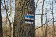Traccia di escursione sull'albero fotografie stock