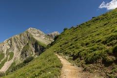 Traccia di escursione sulle montagne con le mucche Fotografia Stock Libera da Diritti