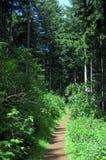 Traccia di escursione in una foresta Fotografie Stock Libere da Diritti