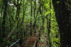 Traccia di Forest At Ang Ka Nature in Doi Inthanon Immagine Stock Libera da Diritti