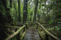 Traccia di Forest At Ang Ka Nature in Doi Inthanon Fotografie Stock