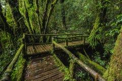 Traccia di Forest At Ang Ka Nature in Doi Inthanon Fotografia Stock Libera da Diritti