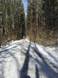 Traccia di inverni Fotografia Stock