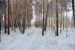 Traccia di inverno Fotografie Stock