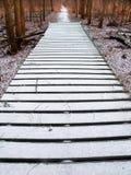 Traccia di inverno della prerogativa della foresta di Midwest Immagini Stock