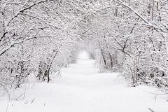 Traccia di inverno in foresta Immagini Stock Libere da Diritti
