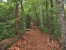 Traccia di Joyce Kilmer Memorial Forest Hiking Fotografie Stock Libere da Diritti