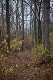 Traccia di legni fotografia stock